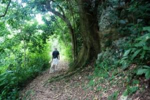 hike2951lor