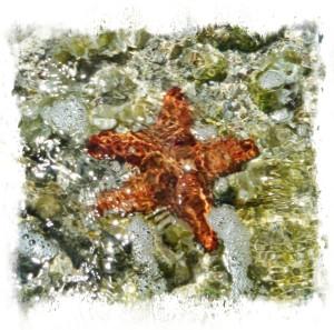 starfish3850fr